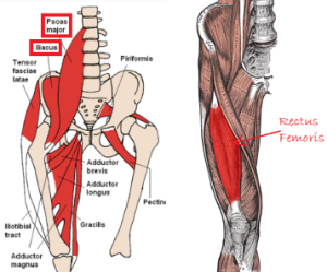 Rectus femoris and hip flexors